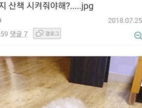 강아지 산책 시켜줘야해?....JPG
