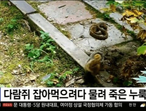 한국다람쥐 클라스.JPG