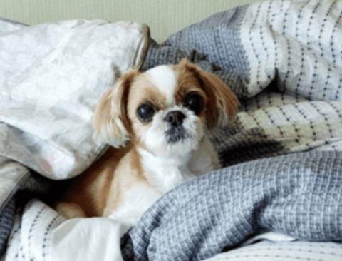 [스압] 웹툰 속 강아지와 고양이 실사.jpg