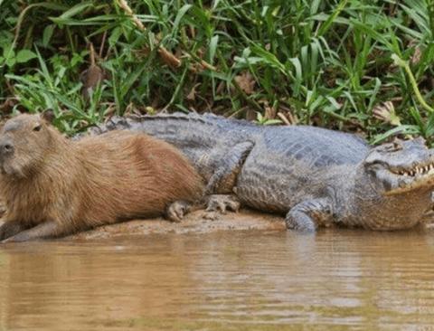 다양한 동물들과 친하게 지내는 동물