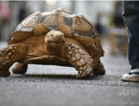 20년동안 거북이를 키운 일본 할아버지