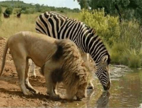 다큐 촬영중 잠시 휴식을 즐기는 야생동물들