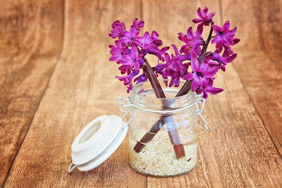 hyacinth-747131_960_720.jpg