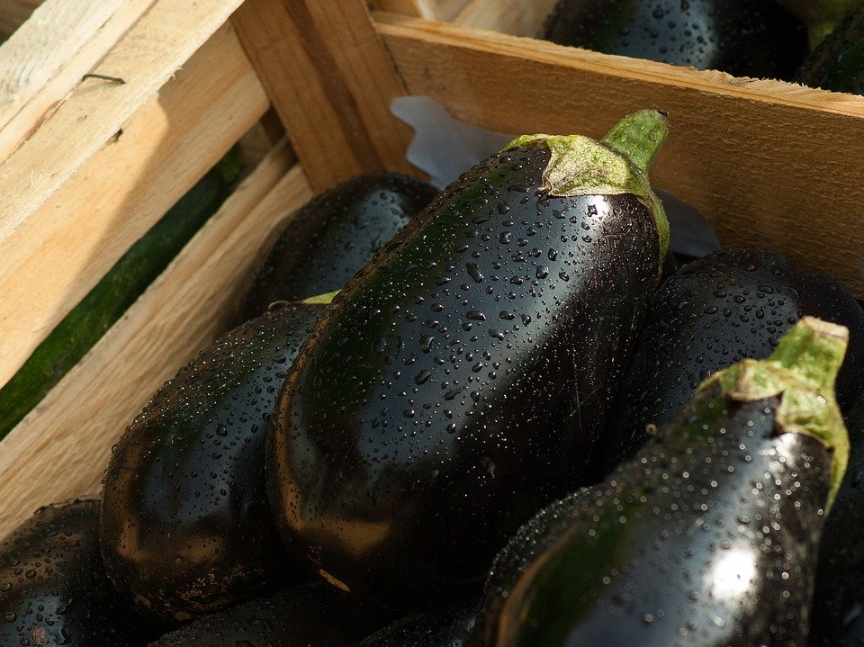 eggplant-1707629_960_720.jpg