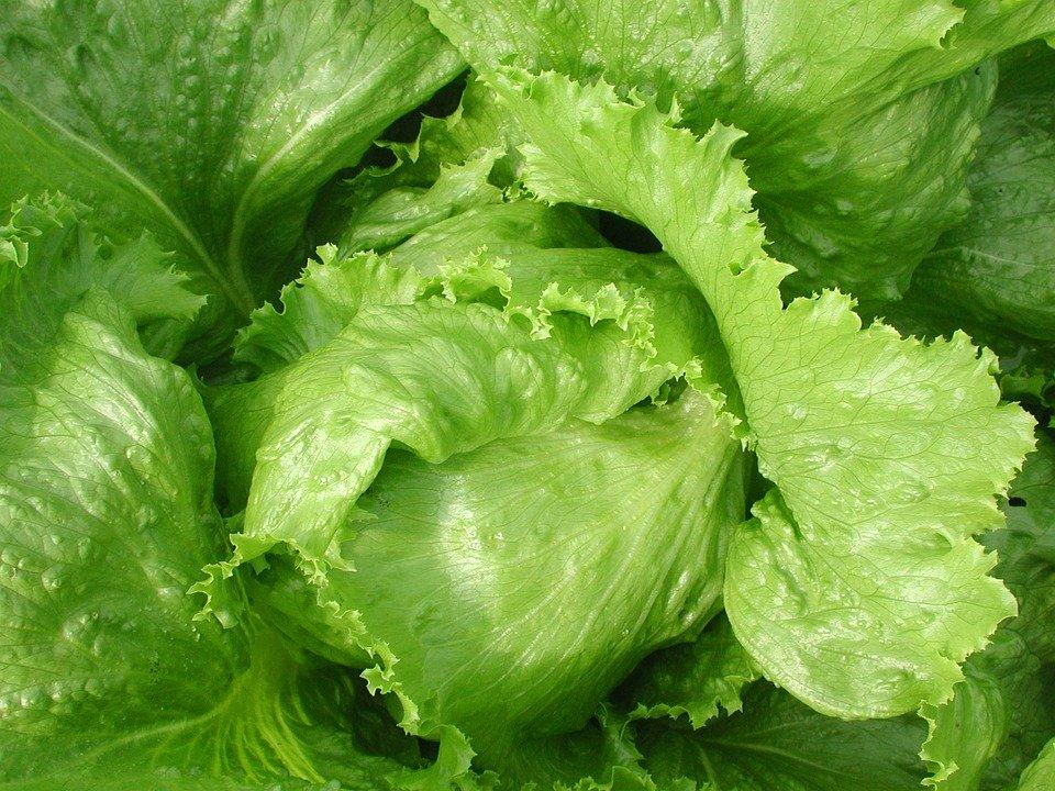 leaf-3060759_960_720.jpg