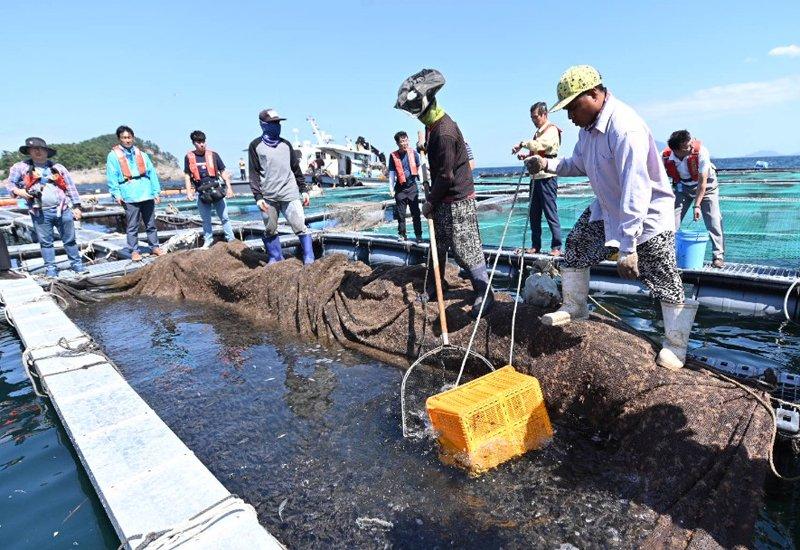 2019적조발생해역양식어류긴급방류(남해)(1).jpg