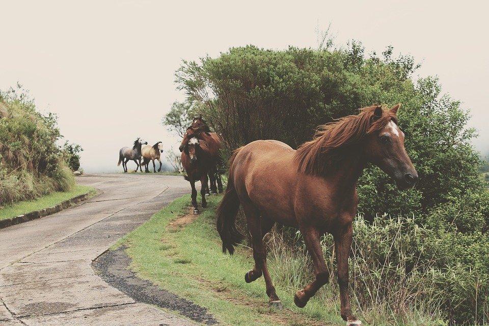horse-1210043_960_720